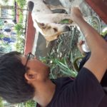A student feeding a stray at the Ahar canteen in the camous